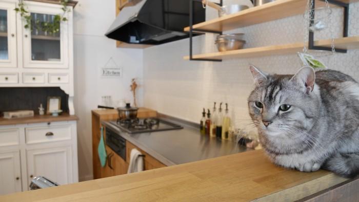 猫ちゃんたちとのびのび暮らせるお家